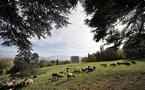 L'IMAGE DU JOUR: Moutons à Genève