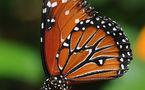 L'IMAGE DU JOUR: Jardin des papillons, Hunawihr