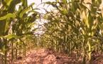 Le Bénin attend toujours son premier verre de biocarburant