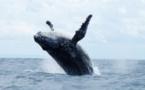 Festival des baleines