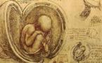 L'IMAGE DU JOUR: Le placenta vu par Leonardo da Vinci