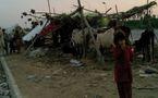 Les inondations au Pakistan n'ont pas touché que les hommes, mais également les animaux
