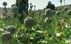 CHUTE DE LA PRODUCTION D'OPIUM, SELON L'ONUDC EN AFGHANISTAN