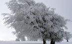 L'IMAGE DU JOUR: Givre sur la Forêt-Noire