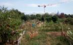 A Dijon, des potagers collectifs résistent aux grues