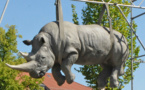 L'IMAGE DU JOUR: Rhinocéros suspendu