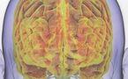 Nous avons un deuxième cerveau !