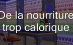 La santé et notre alimentation : Les causes de l'obésité