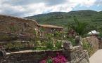Interview vidéo - Hérault: un couple d'agriculteurs thérapeutes invente l'oléothérapie