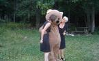Le dernier ours du Vercors localisé ?