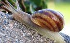 L'IMAGE DU JOUR: Escargot