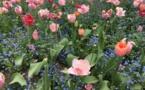 Giverny : l'écrin de verdure de Claude Monet