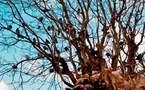 L'IMAGE DU JOUR – L'arbre aux oiseaux