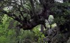L'IMAGE DU JOUR – Dans la forêt