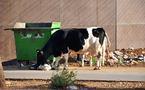 L'IMAGE DU JOUR – Les vaches métropoles