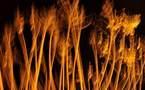 L'IMAGE DU JOUR – Les branches de feu