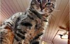 Les bars à chats : le bien-être des humains, est-il aussi celui des chats ?