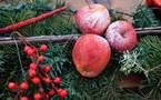 L'IMAGE DU JOUR – Pommes de Noël