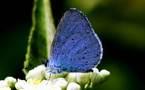 L'IMAGE DU JOUR – Papillon bleu après la pluie