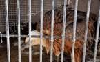 L'IMAGE DU JOUR – Dans sa cage