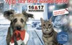 Le Noël des bêtes abandonnées revient à Nice ce week-end!