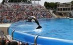 Les parcs aquatiques, responsables de prisons sous-marines