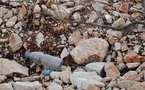 L'IMAGE DU JOUR – Le plastique pollue