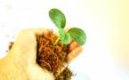 Les collèges dans la lutte pour l'écologie