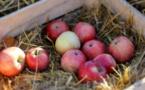 La fête de la pomme, une institution française