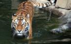 Région bordelaise: des animaux sauvages dans les cirques?
