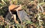 L'IMAGE DU JOUR – Une botte dans la nature