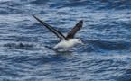 L'estimation de l'ampleur de la pêche illégale grâce aux albatros