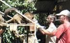 Décès inexpliqué d'une cinquantaine de lémuriens sur l'ilôt Mbouzi