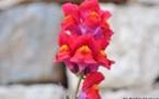 L'IMAGE DU JOUR – La beauté des fleurs