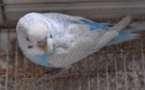 L'IMAGE DU JOUR – Chants d'oiseaux