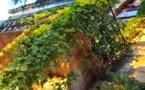 L'IMAGE DU JOUR – Plantes et lumière