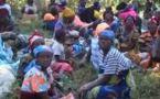 Opération d'urgence dans l'est de la RDC