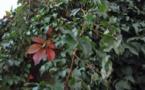 L'IMAGE DU JOUR - Les couleurs de l'automne