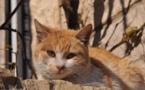 L'IMAGE DU JOUR – Le repos du chat