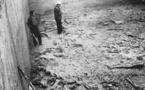 L'Homme de Néandertal chassait le mammouth pour construire des habitations