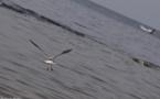 L'IMAGE DU JOUR – Oiseau de mer