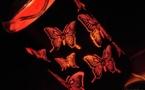 L'IMAGE DU JOUR – Lampadaire aux papillons