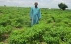 Bénin: Les communautés à l'épreuve de l'adaptation aux changements climatiques