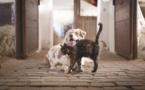 Animaux : L'Assemblée souhaite en finir avec la vente de chiens et de chats en animalerie