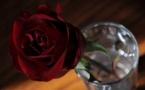 L'IMAGE DU JOUR – Rose