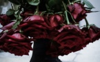 Les secrets de la rose