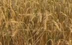 AUDIOGUIDE: A la découverte de la route du blé - 1