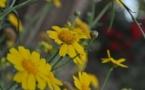 L'IMAGE DU JOUR – Fleurs du printemps