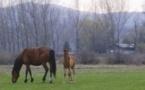 Compétition internationale au Club d'équitation Equestria