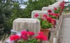 L'IMAGE DU JOUR – Pots de fleurs